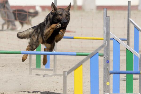 Hund-WS-14